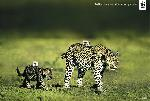 o_wwf-leopards-gr - fashion claims more victims than you think.jpg